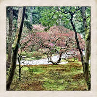 Japanese Gardens, Seattle